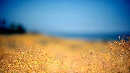grass, yellow, foreground
