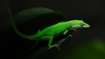 green, foliage, dark