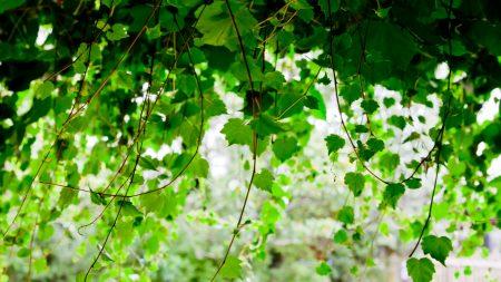 green, leaf, twig trees