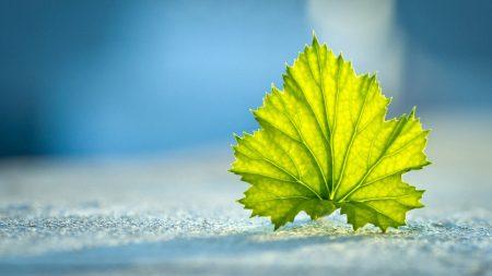 green, leaves, blue