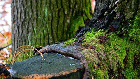 green, tree, winter
