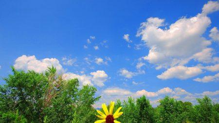 greens, flower, yellow