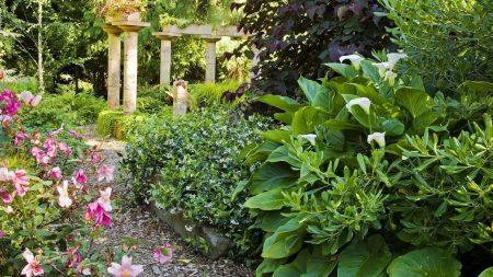 greens, garden, flowers