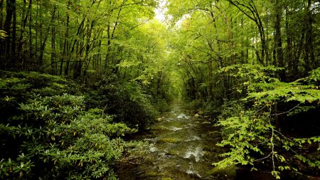 grove, stream, trees