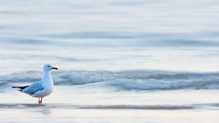 gull, bird, sea