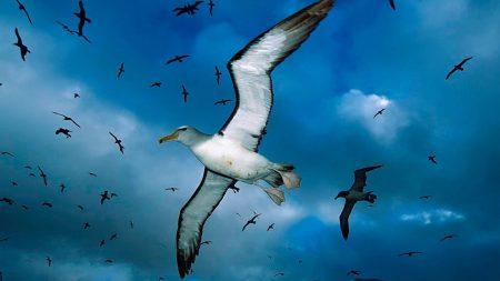 gulls, flock, sky