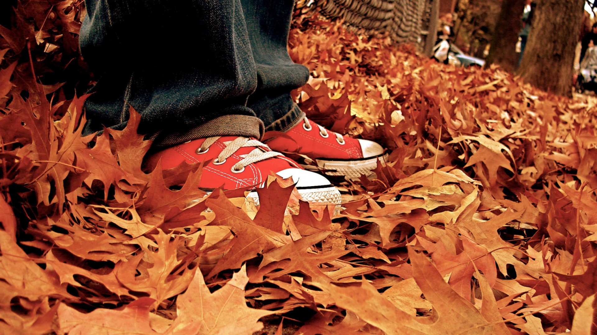 Download Wallpaper 1920x1080 gym shoes, leaves, autumn Full HD 1080p