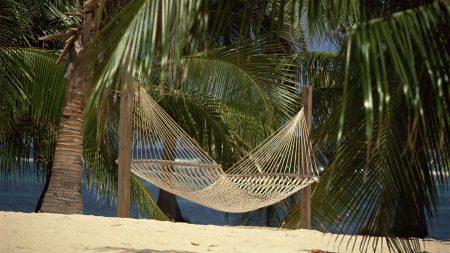 hammock, palm trees, sand