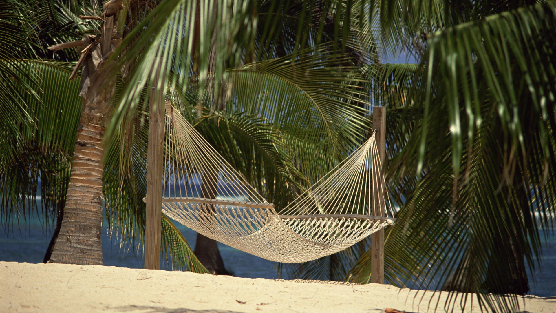 Download Wallpaper 1920x1080 Hammock Palm Trees Sand