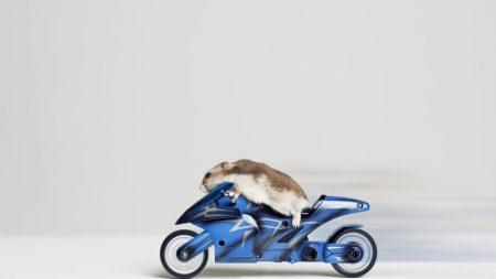 hamster, motorcycle, racing