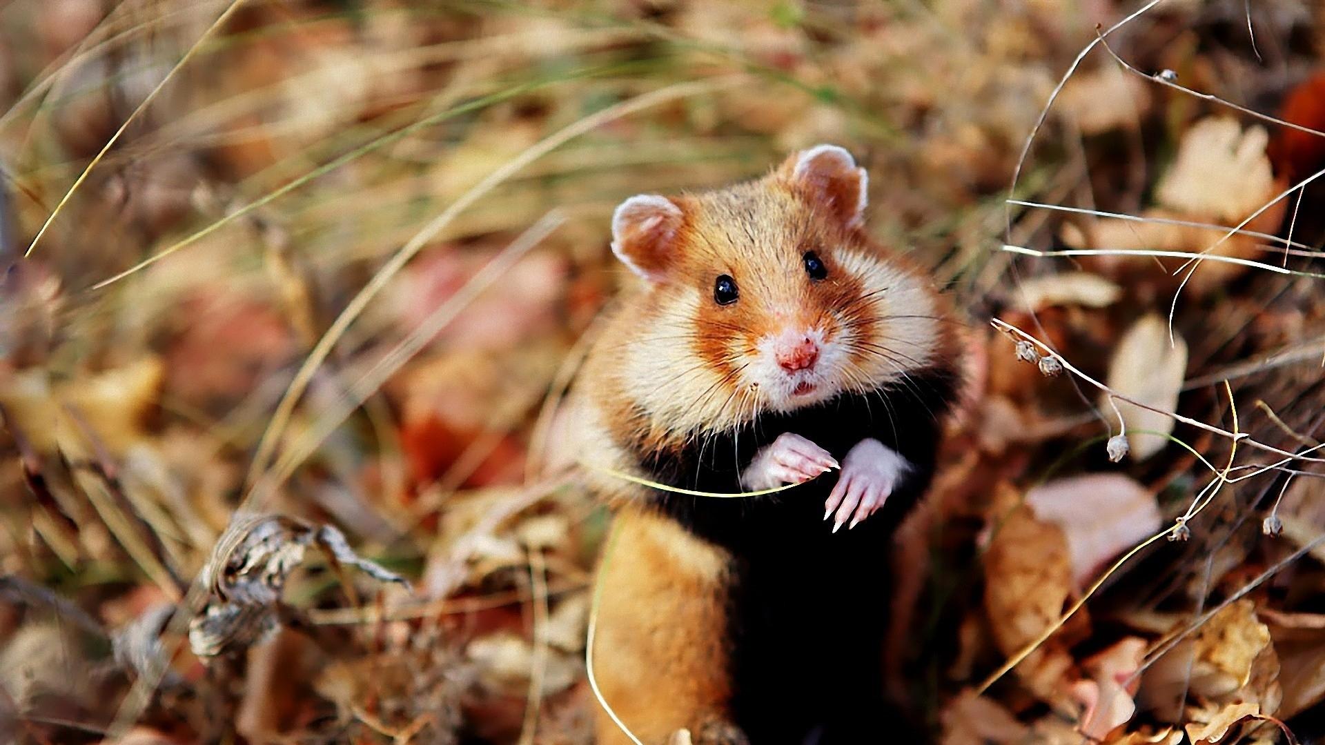 X-Hamster.De