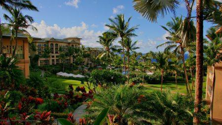 hawaii, hotel, palm trees