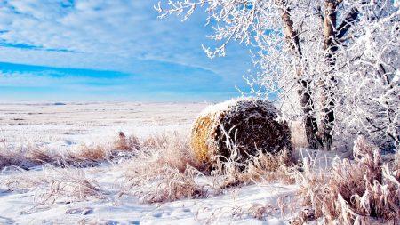 hay, bale, winter