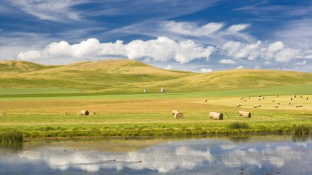 hay, bales, field