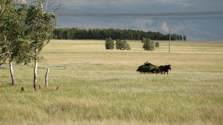 hay, landscape, autumn