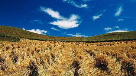 hay, sheaves, summer