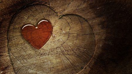 heart, love, tree stump