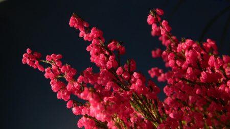 heather, bouquet, close-up