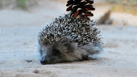 hedgehog, bump, mining