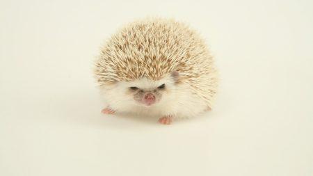 hedgehog, spines, light