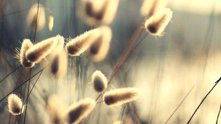 herbs, blurred, bright