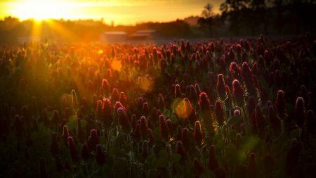 herbs, flowers, sun
