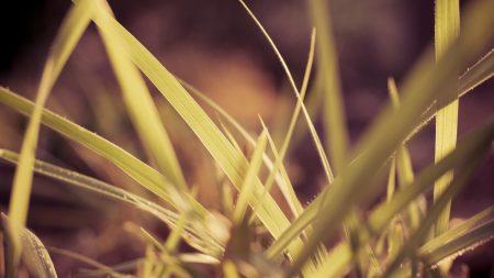 herbs, plants, blurring