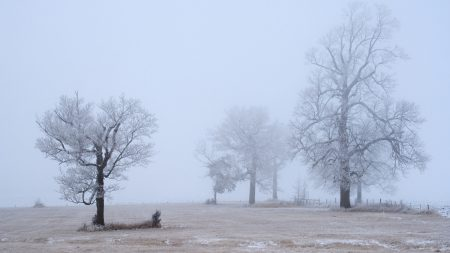 hoarfrost, trees, emptiness