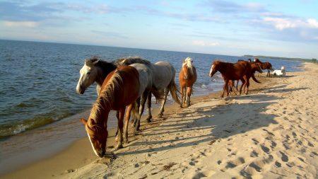 horse, beach, sea