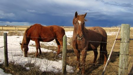 horse, corral, fences