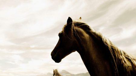 horse, couple, running