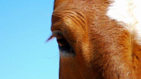 horse, eye, sky