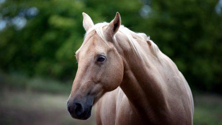 horse, face, eyes