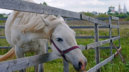 horse, fence, grass