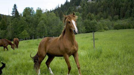 horse, field, grass