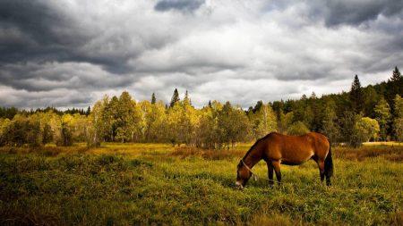horse, grass, field