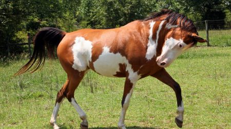 horse, grass, spotted