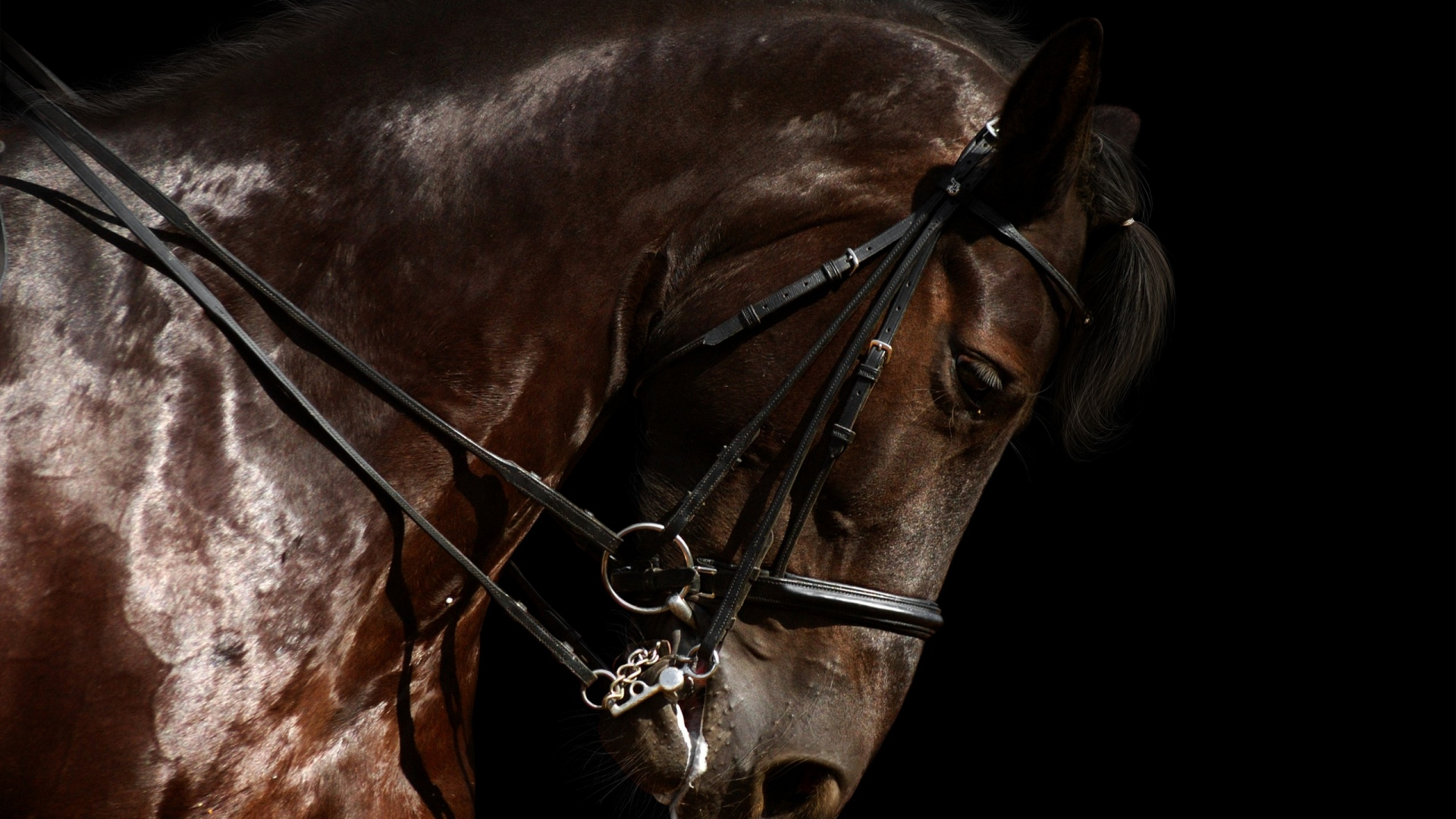 Download Wallpaper 1920x1080 Horse Harness Jumping Head Full Hd 1080p Hd Background