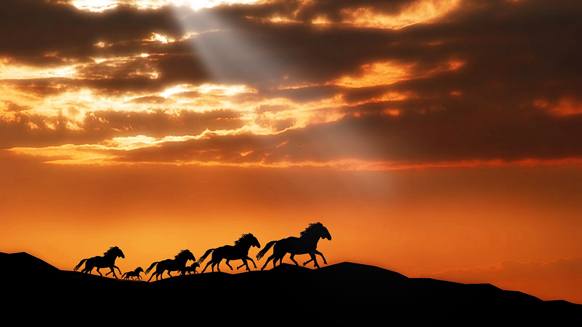 Earnings Disclaimer >> Download Wallpaper 1920x1080 horse, herd, sunset, silhouettes, escape Full HD 1080p HD Background