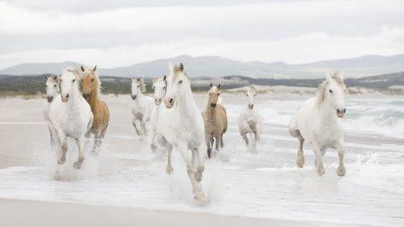 horse, herd, water