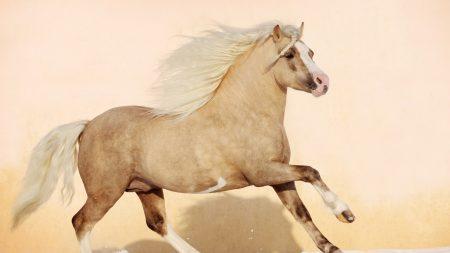 horse, mane, jump