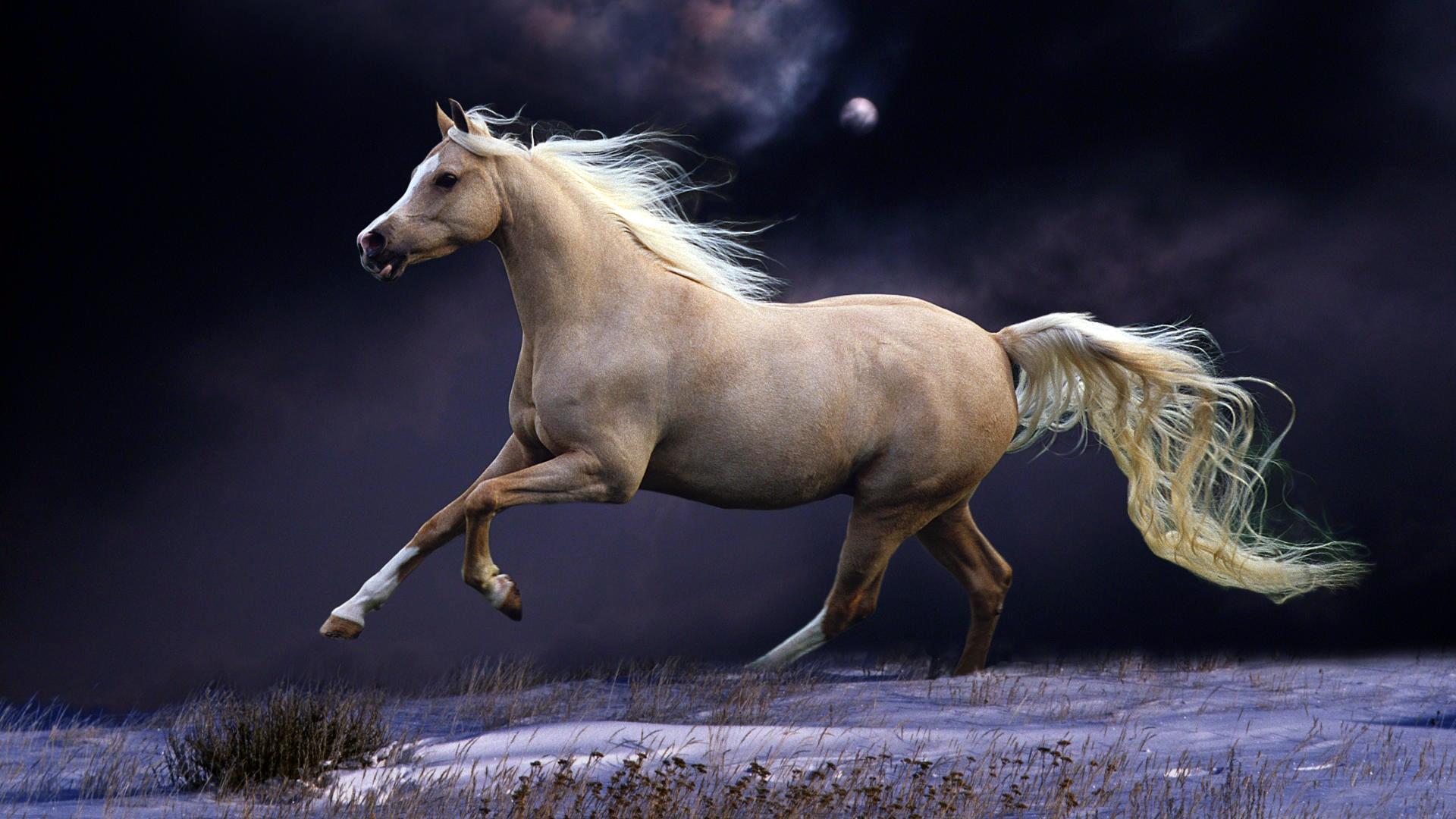 Download Wallpaper 1920x1080 Horse Mane Running Beautiful