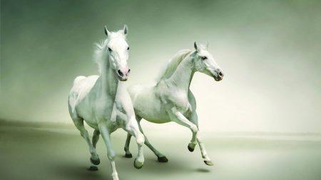 horse, running, couple