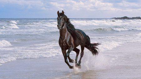 horse, running, spray