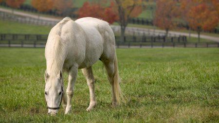 horse, walk, grass