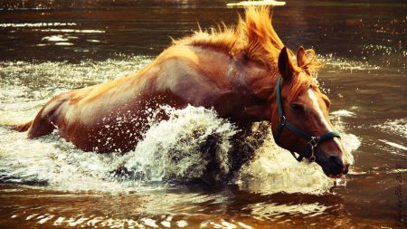 horse, water, spray