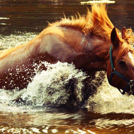 horse, water, spray