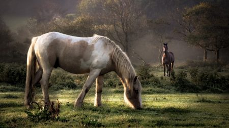 horses, grass, couple