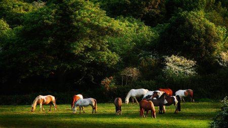 horses, grass, trees