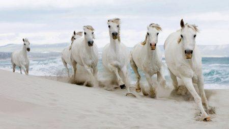 horses, herd, run